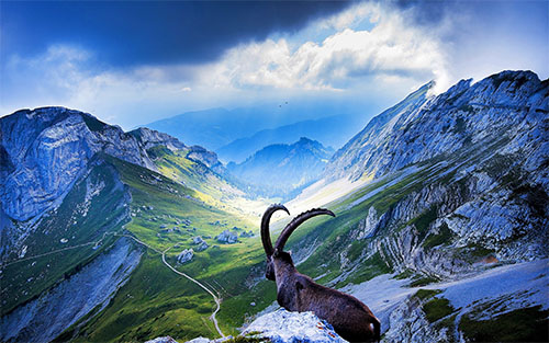 Холдинговая компания в Швейцарии